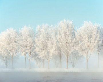 Avenue gelée sur Lars van de Goor