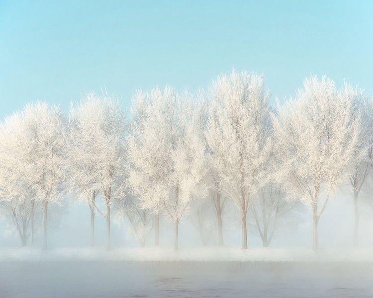 Frozen Lane