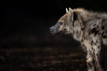 Hyänenporträt enprofile von Joy van der Beek