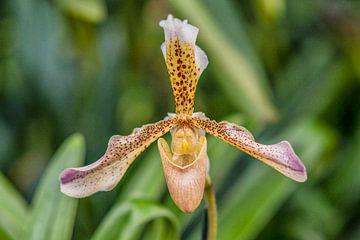 Orchidee 5 van John van Weenen