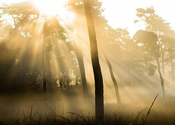 Magische zonsopkomst op de Veluwe