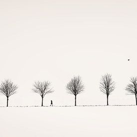 Allee von Lena Weisbek