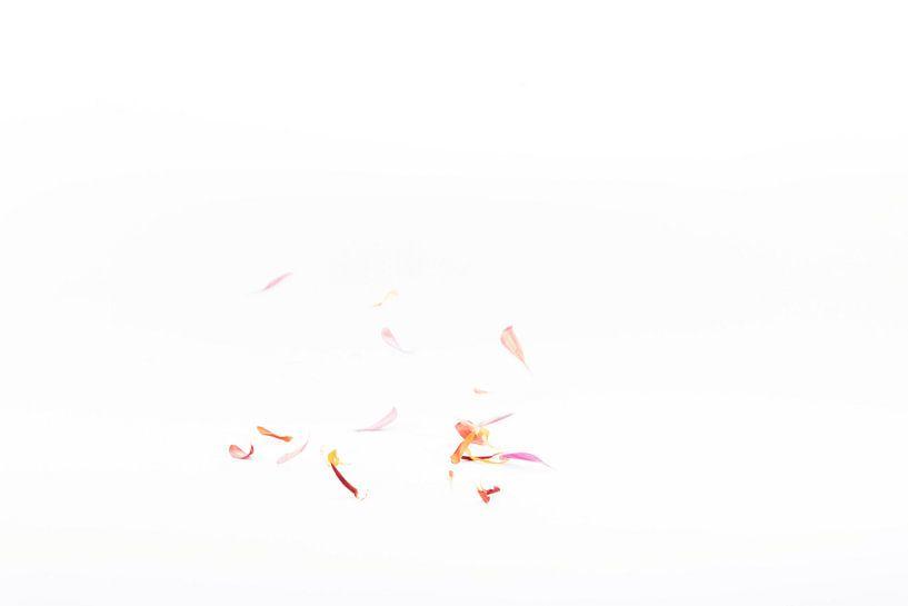 vallende bloemblaadjes 3 van Anita Visschers