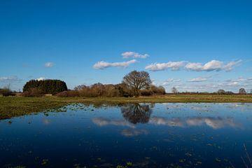 Ein Baum spiegelt sich im Wasser, während Wolken am blauen Himmel vorbeiziehen von Matthias Korn
