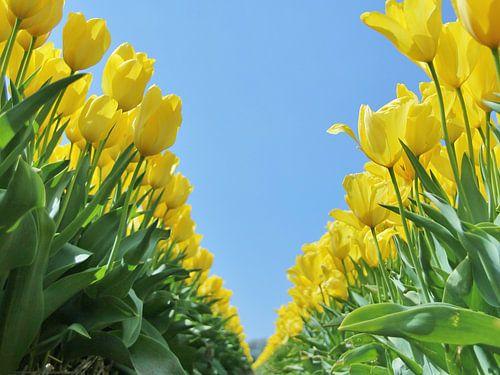 Yellow tulips von Leendert van Rossum