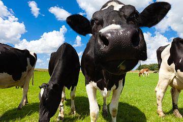Grüne Wiese mit Kühen im Sommer von Bas Meelker