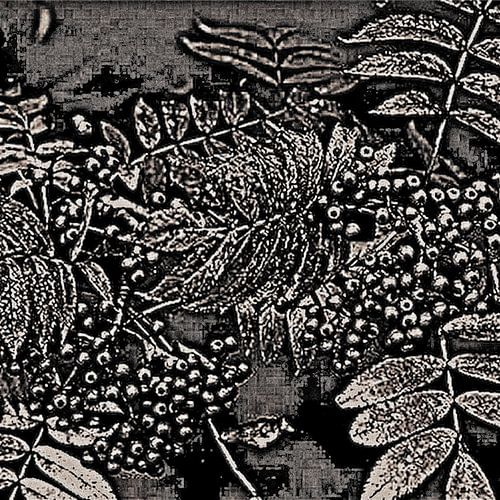 Abstract Autumn Berries In Black And White van