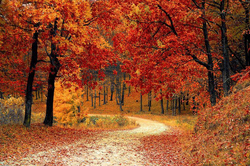 Herfst in het bos (bomen, bladeren en bospad) van Roger VDB
