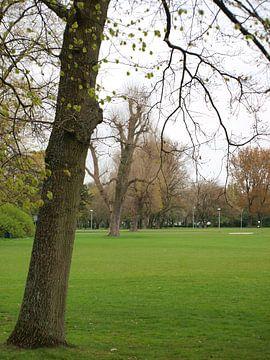 Schuine bomen von Rinke Velds