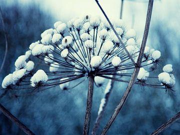 Winterwonderland van Nanette de Jong