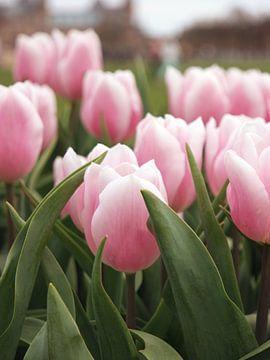 Tulpen in Amsterdam voor het Rijksmuseum van Evelien Oerlemans