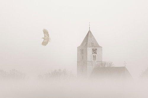 Zeearend in de mist