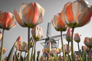 Tulpen bij windmolen van Frans Lemmens