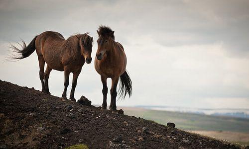 twee paarden von Bart Hardorff