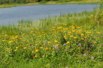 Wilde bloemen aan het water van Ans Bastiaanssen