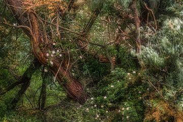 Weidenwald entlang der Waal von jowan iven