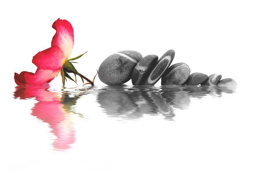 Fleur d'églantine et galets