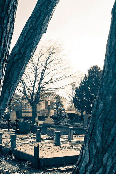 Algemene Begraafplaats Den Haag van Raoul Suermondt