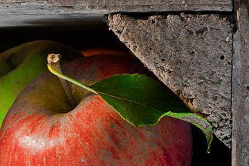 Elstar-appel in kist van Sjaak van Etten