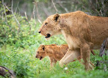 leeuwin met welpje von Inez Allin-Widow
