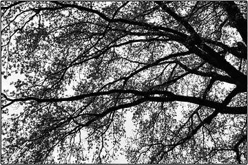 Baumzweige im Frühling von Bert Bouwmeester