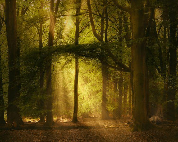 Pure Spirits Of The Forest van Kees van Dongen