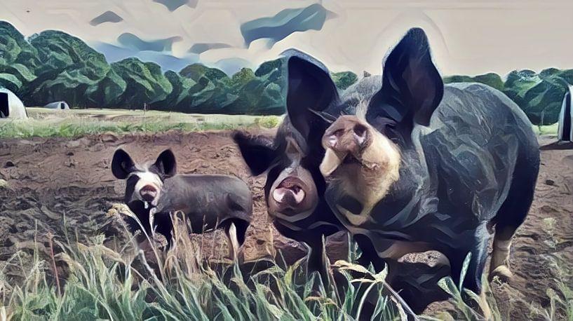 Surrealistische Malerei von farbigen Schweinen auf einer Wiese von Twentse Pracht