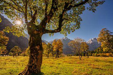 """Gouden herfst in de Karwendel ? hier bij """"Großer Ahornboden"""" van Einhorn Fotografie"""
