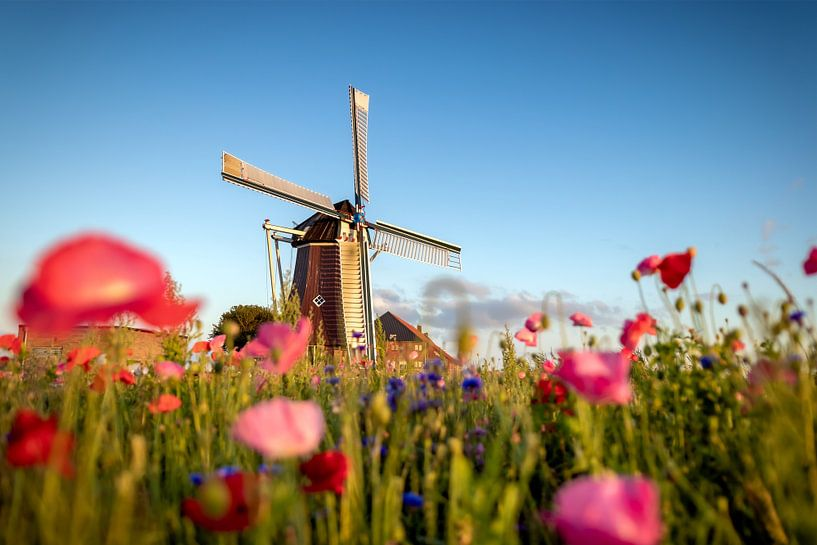 Wilde Bloemen van Johan Mooibroek