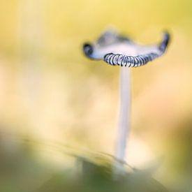 Mushroom van Lia Hulsbeek Brinkman