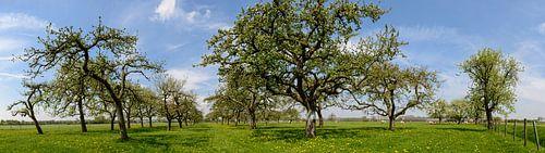 Oude Boomgaard