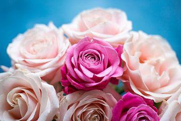 Roze rozen op blauwe achtergrond van DeedyLicious
