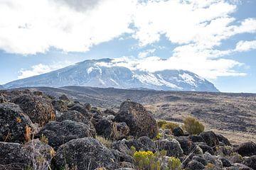 Dorre vlakte op de Kilimanjaro van Mickéle Godderis