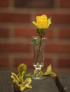 Gele roos van Stefania van Lieshout