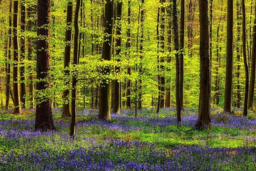 Frühlingswald mit Hasenglöckchen van Daniela Beyer