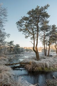winter landscape with trees and water