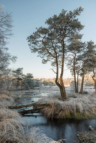 winter landscape with trees and water sur ChrisWillemsen
