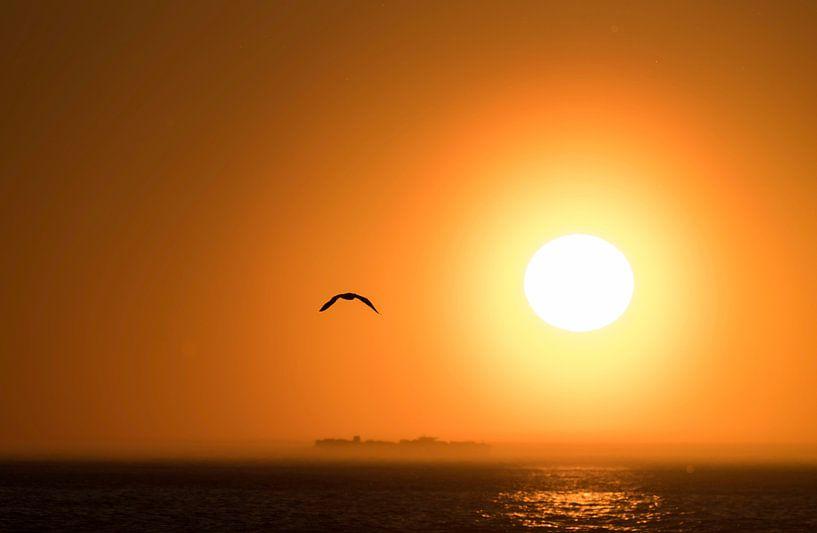 Meeuw op Terschelling met ondergaande zon van Leon Doorn
