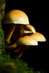 Kleine paddenstoeltjes van Gerard de Zwaan