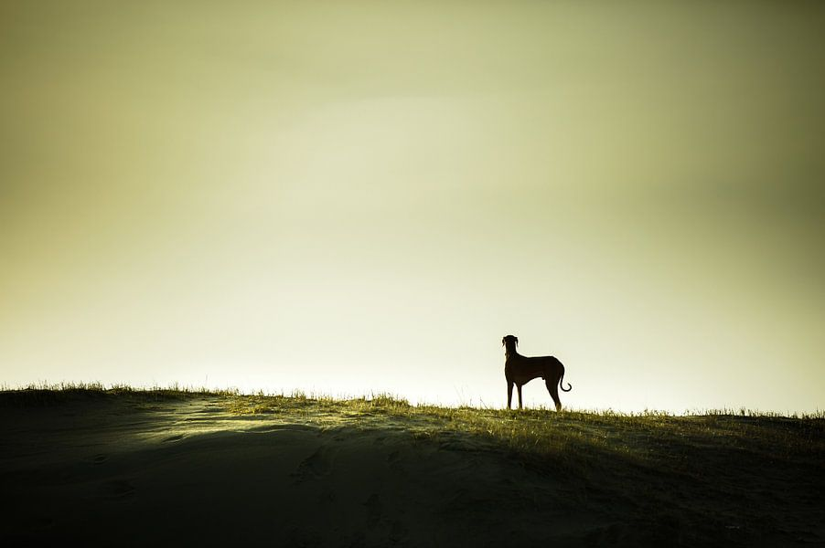 Eenzaam op de horizon