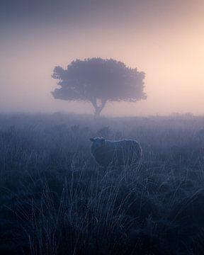 Een schaap in de mist van Niels Tichelaar