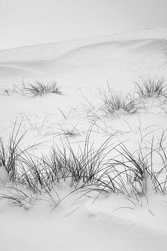 Winterlandschap met duingras van Vanessa Devolder