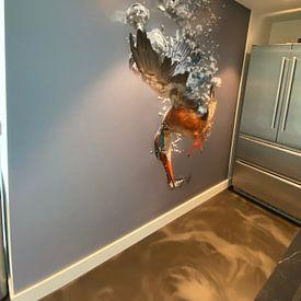 Klantfoto: IJsvogel - National Geographic winner!! Vrouwtjes ijsvogel in actie! van Dirk-Jan Steehouwer, als naadloos behang