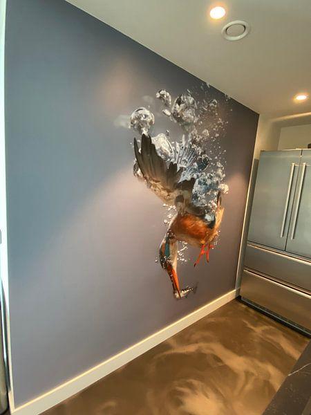 Kundenfoto: Eisvogel - Gewinner des National Geographic! Eisvogelweibchen in Aktion, unter Wasser tauchend (bis  von Dirk-Jan Steehouwer