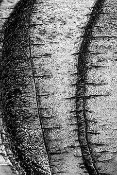 Bark closeup van Peter van Eekelen