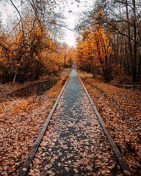 Boswegel tussen de gevallen bladeren in de herfst