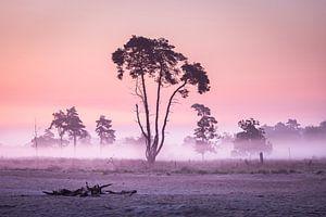 De Hollandse savanne