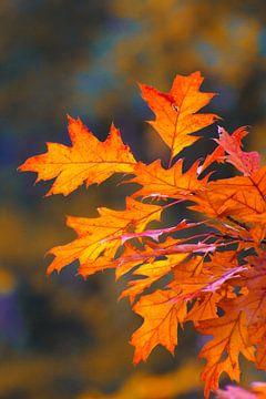 Feuilles d'automne, rouge orangé sur Herman Kremer