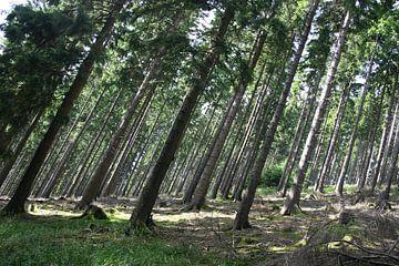 Bomen op een berghelling van EnWout