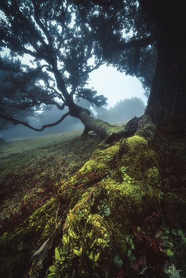 Madeira Kanaalwoud Nevelwoud